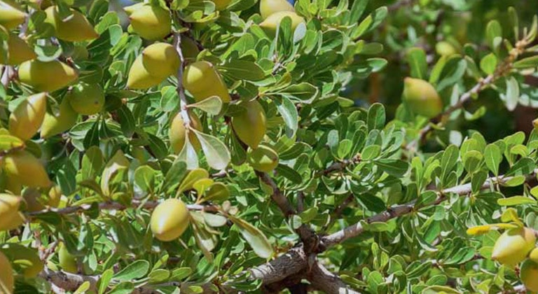 benefits-of-adding-argan-oil-to-routine-medium