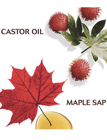 Maple-ingredients